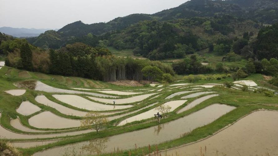 Beautiful terraced rice paddies in Chiba